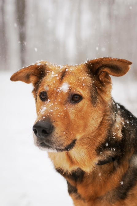 Jake in the snow 041_1
